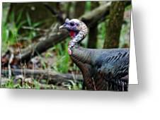 Turkey Greeting Card