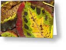 Turning Leaves Greeting Card by Stephen Anderson