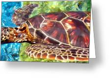 Turtle 1 Greeting Card