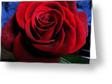 Twilight Rose  Greeting Card by Etti PALITZ