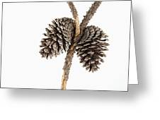 Two Pine Cones One Twig Greeting Card