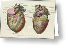 Two Views Of The Heart, With  The Parts Greeting Card