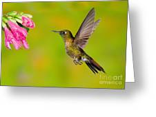 Tyrian Metaltail Hummingbird Greeting Card