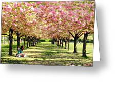 Under The Cherry Blossom Trees Greeting Card