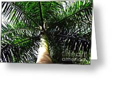 Under The Palm Greeting Card