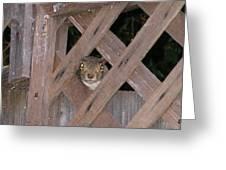 Curious Squirrel Greeting Card