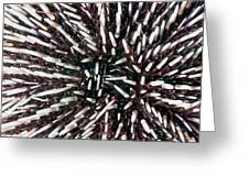 Urchin Spines Greeting Card