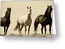 Usa, Wyoming, Young Wild Stallions Greeting Card