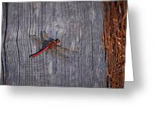Vagrant Darter Greeting Card