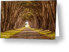 Valiant Trees Greeting Card