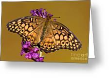 Variegated Fritillary Greeting Card