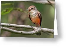Vermilion Flycatcher Greeting Card
