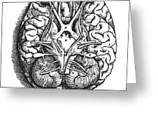 Vesalius: Brain Greeting Card