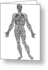 Vesalius: Venous System Greeting Card