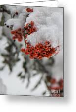 Viburnum Shrub In Snow Greeting Card