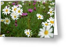 View Of Daisy Flowers In Meadow Greeting Card