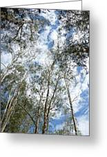 View Of Towering Trees Greeting Card