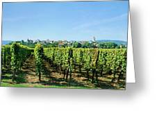 Vineyard, Alsace, France Greeting Card