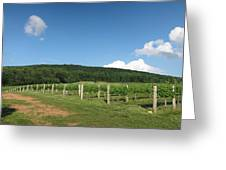 Vineyards In Va - 12127 Greeting Card
