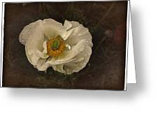 Vintage White Poppy Greeting Card