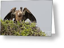 Vultures With Full Crops Greeting Card