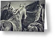 Waiting Horses Greeting Card