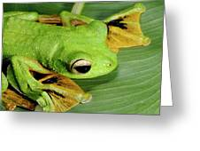 Wallace's Flying Frog Greeting Card