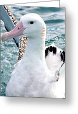 Wandering Albatross Greeting Card