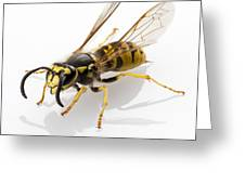Wasp Isolated  Greeting Card