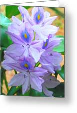 Water Hyacinth Greeting Card