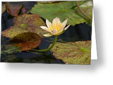 Water Lily 25 Greeting Card