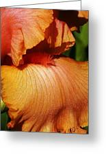 Waves Of Petals Greeting Card by Bruce Bley