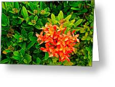 West Indian Jasmine In Sukhothai Historical Park-thailand Greeting Card