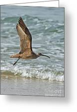 Whimbrel In Flight Greeting Card