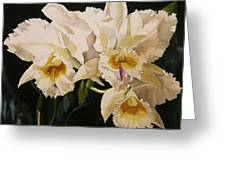 White Cattleya Orchids Greeting Card