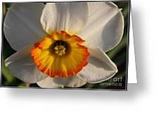 Paper White Daffodil Greeting Card