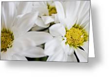 White Daisy Greeting Card by John Holloway