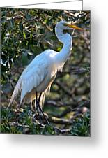 White Egret Greeting Card
