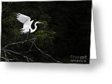 White Egret's Takeoff Greeting Card