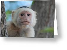 White Face Monkey  Greeting Card