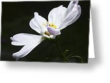 White Flower In Bloom Greeting Card