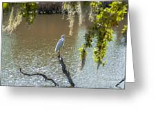 White Heron In Magnolia Cemetery Greeting Card