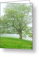 White Oak Tree In Fog Greeting Card