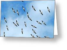White Pelican Sky Greeting Card