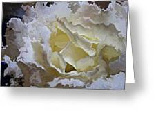 White Rose  Greeting Card by Daniele Smith