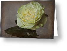White Rose With Old Paper Texture Greeting Card