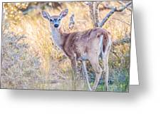 White Tail Deer Bambi In The Wild Greeting Card