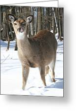 White-tailed Deer Greeting Card