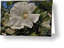 White Greeting Card