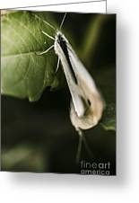 White Winged Moth Insect On A Green Tree Leaf Greeting Card